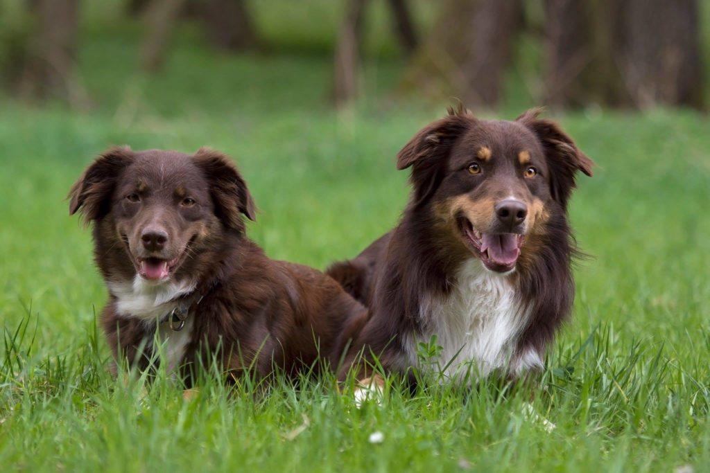 Beam and Rango