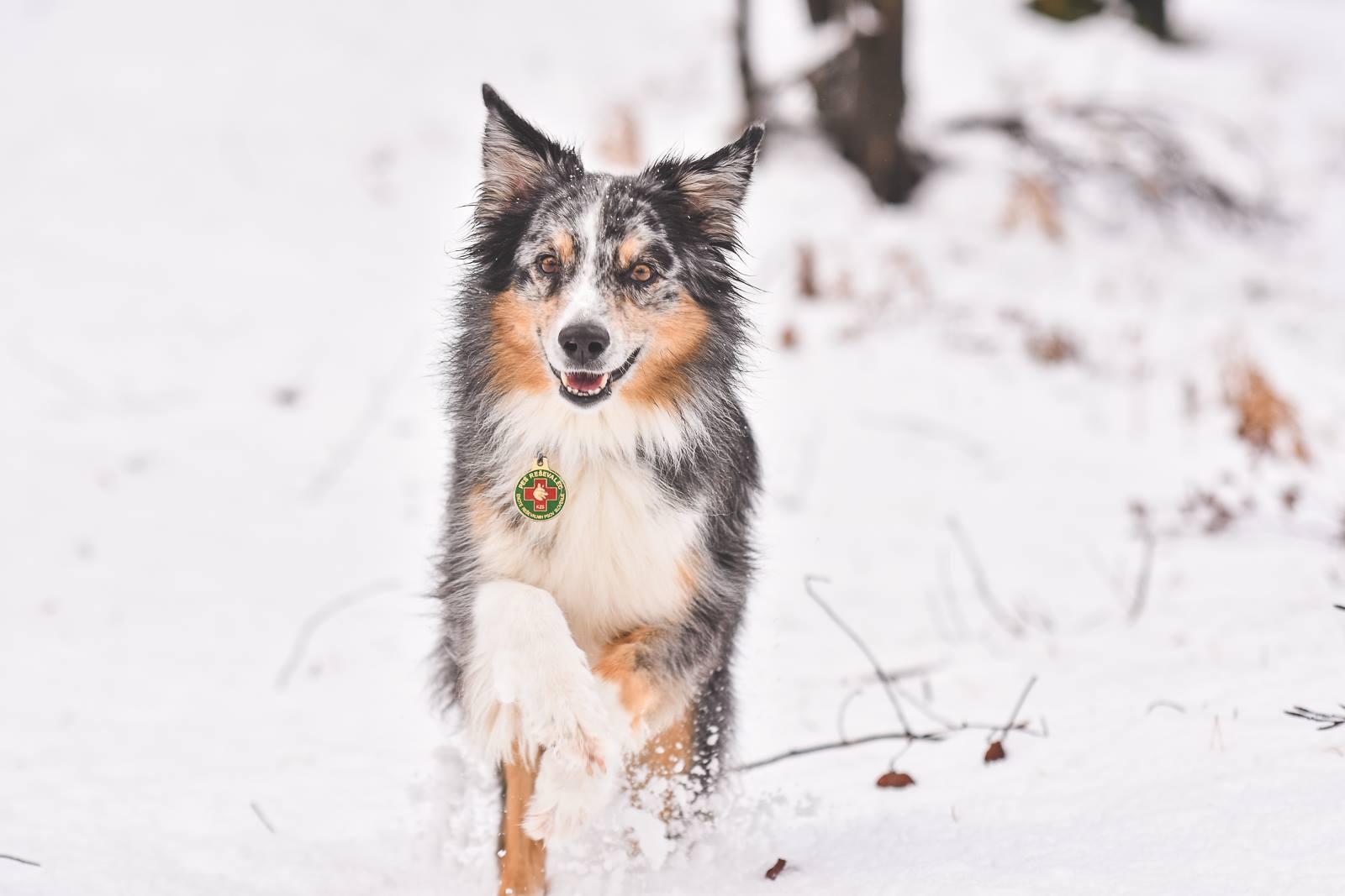Ginny na snegu